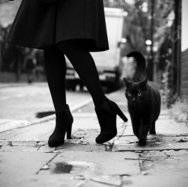 bampw-black-and-white-cat-cats-heels-high-heels-Favim.com-86367